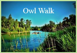 owl-walk